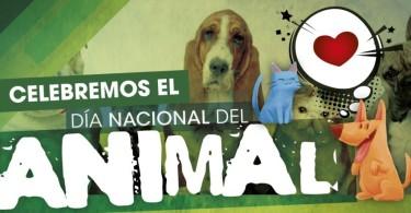 Día del Animal---